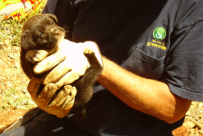 Man holding rescued puppy
